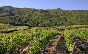 Santa Rita Winery Tour, Santa Rita Wine Experience