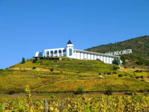 Winery Tour of Indomita and Veramontes
