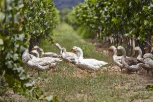 Winery tour of Casas del Bosque and Emiliana